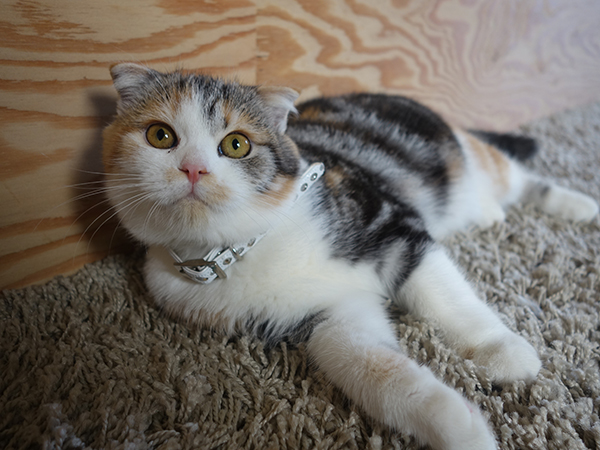 大人猫が多い中、子猫ならではの魅力を放つマリモ