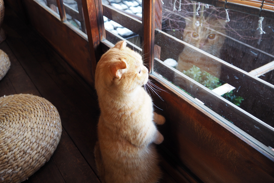 窓に映る姿もたまりません