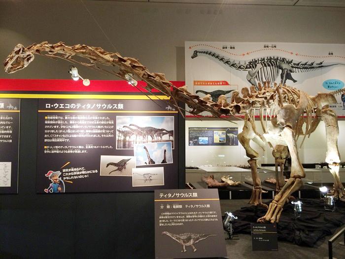 鳥の先祖が恐竜だと示す復元模型