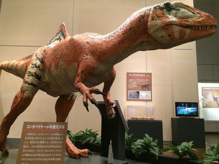 中生代白亜紀(約1億4,500万年前~6,600万年前)のスペインで見つかった化石が展示されている