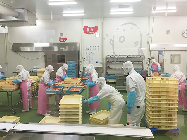 原卵の下ごしらえから漬け込み、熟成、包装までの実際の工程をガラス越しに見学できる工場エリア