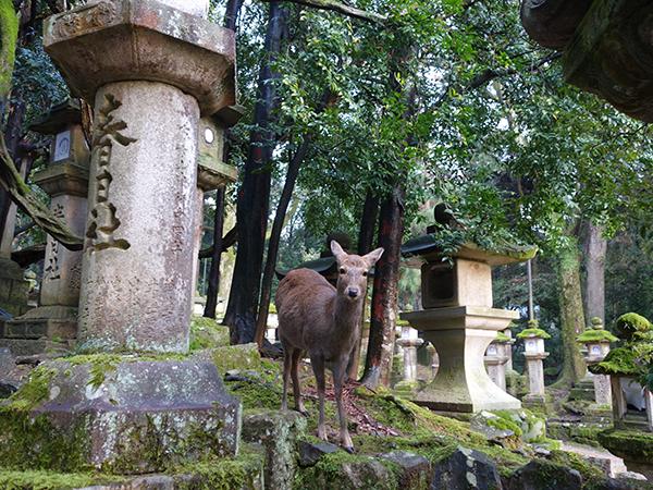 「春日大社」に現れる鹿