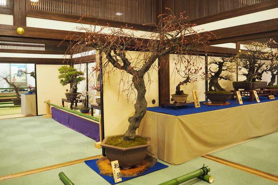 『梅酒Fes』は現在開催中の『盆梅と盆石展』の一環。期間中はアートクラフト市などさまざまなイベントも