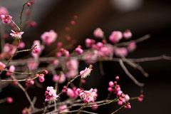 ひと足早い春、関西の「梅の名所」12選