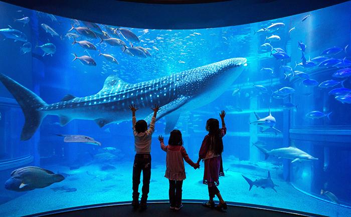 海遊館で開催される「7/19 SHARK DAY!」