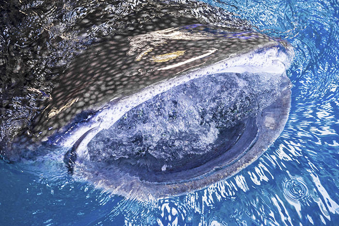 「サメの多様性とその生態」をテーマにトークセッションが行われる