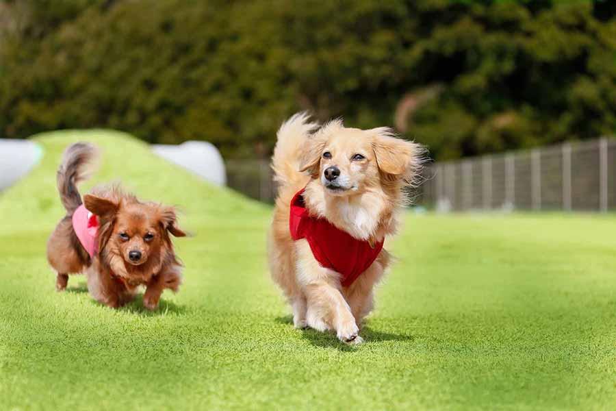 ドギー・ガーデンで犬が自由に遊べるように
