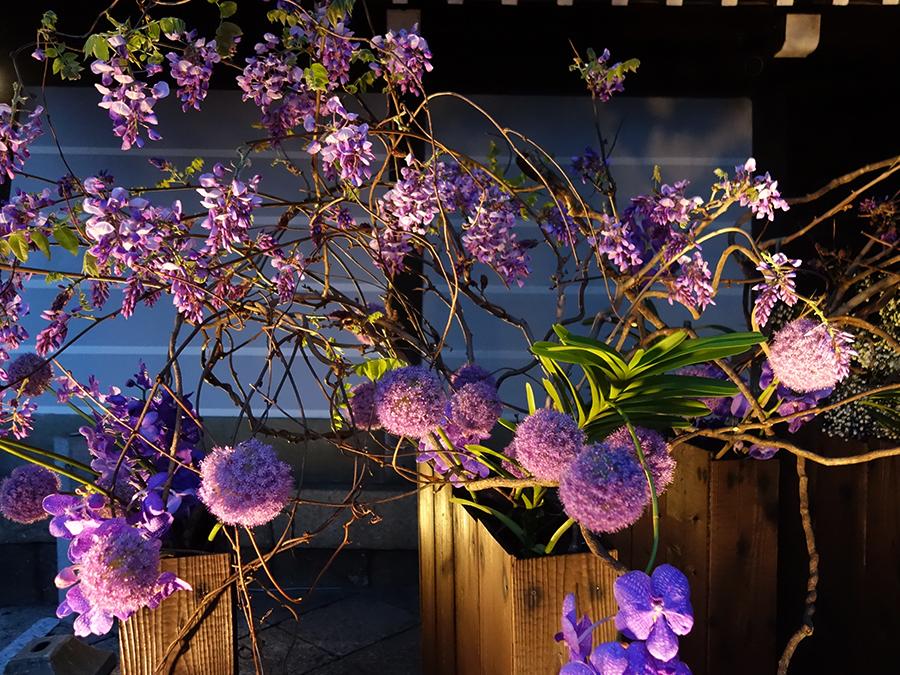 次期家元・池坊専好が六角堂の正式名称の紫雲山頂法寺にちなんで表現した「紫のゆかり」