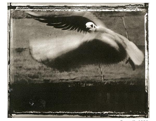 seagull 1998