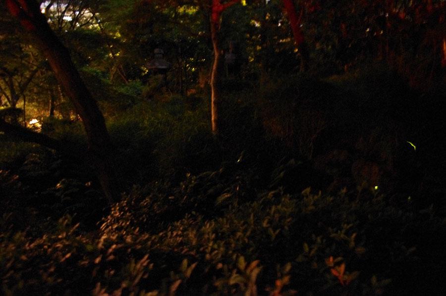 ホタルは、じっと動かず点滅するものも、時折ゆらりゆらりと目の前を移動するものも