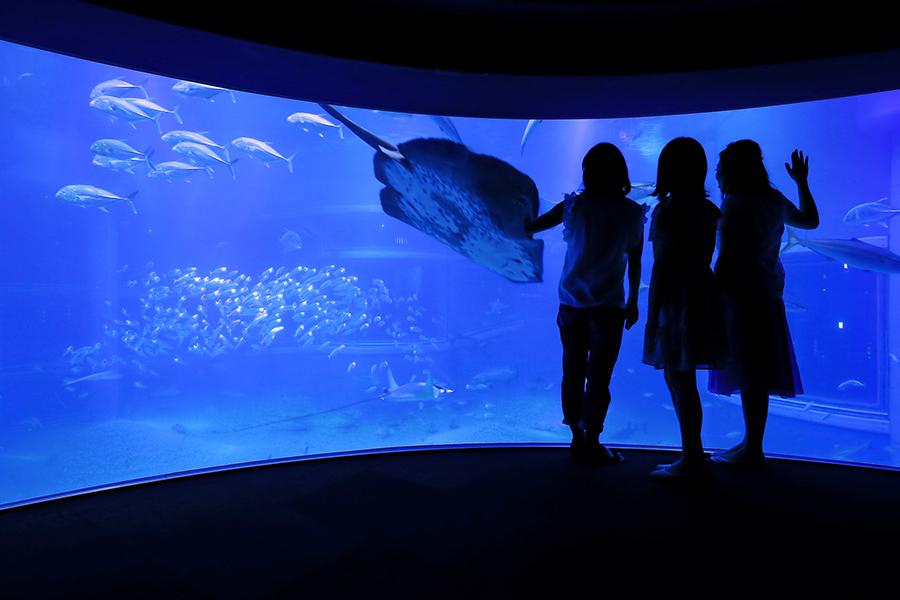 「海遊館」で開催される『夏休み 大人のナイトツアー』