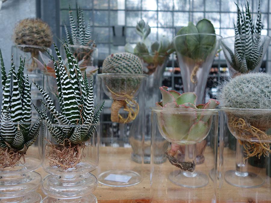 水栽培のサボテンは、根っこ部分だけ水に浸けていると、どんどん成長するそう。涼しげなガラスの花瓶は夏にもぴったり。サボテン2,200円(税別)〜、ガラス容器960円(税別)〜
