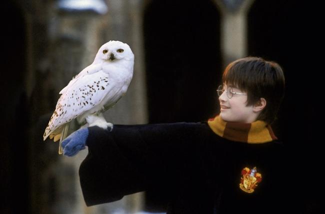 『ハリー・ポッターと賢者の石』のワンシーン HARRY POTTER characters, names and related indicia are (C) & (TM) Warner Bros. Entertainment Inc. Harry Potter Publishing Rights (C) JKR. (s16)