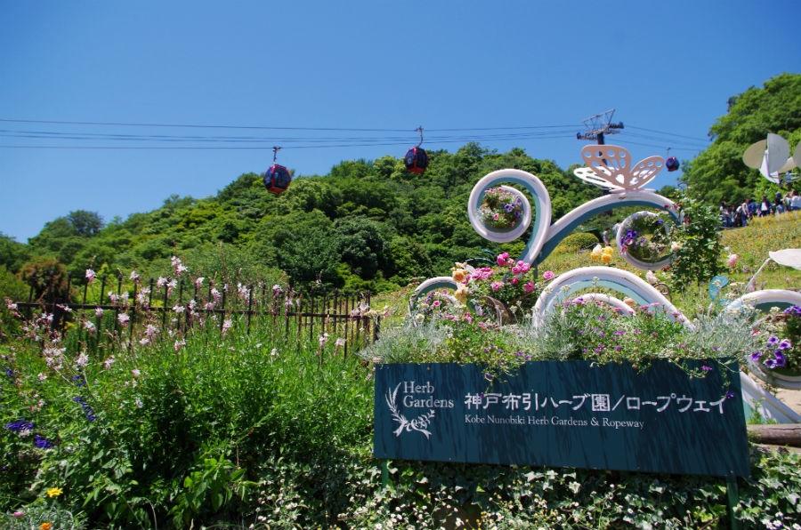 あたり一面にハーブの香りが漂う「神戸布引ハーブ園/ロープウェイ」