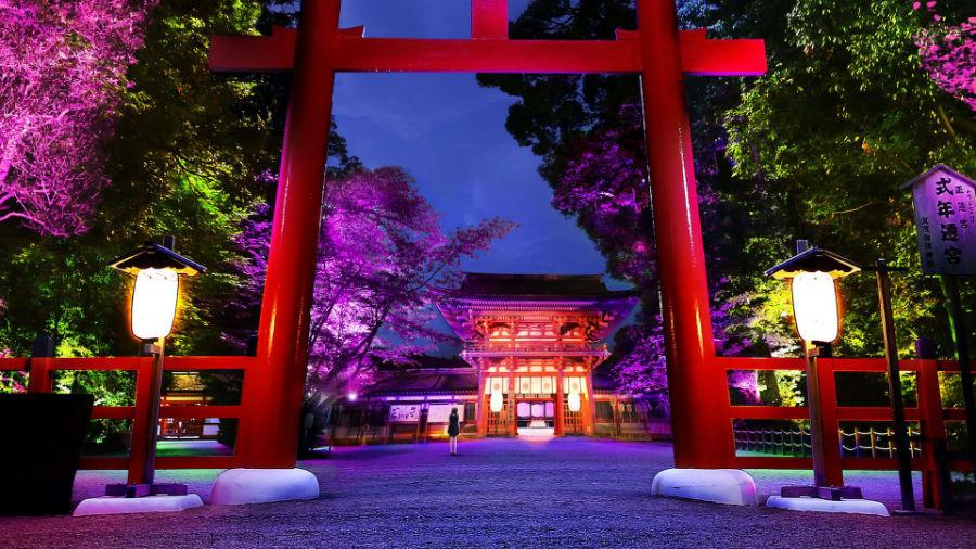 呼応する木々 - 下鴨神社 糺の森 / Resonating Trees - Forest of Tadasu at Shimogamo Shrine teamLab, 2016, Interactive Digitized Nature, Endless, Sound: Hideaki Takahashi