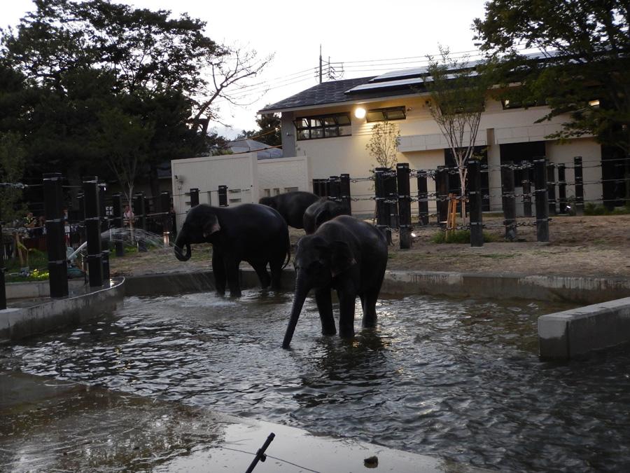 京都・京都市動物園『夏の夜間開園』