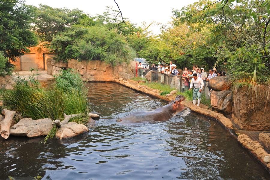 兵庫・王子動物園『トワイライトZOO』