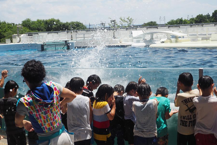 イルカたちも水遊びが大好き!ずぶぬれになって夏の暑さを吹き飛ばそう(着替えは必須)