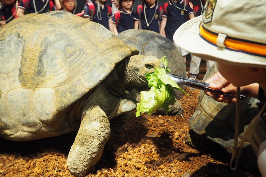 野菜をあげる体験も。ゾウガメに触れた子どもたちは「気持ち良かった」「ツルツルでかわいかった」と興奮