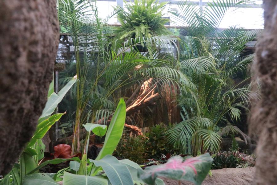 熱帯の樹木が生い茂る「熱帯の湿地」エリア(写真はビルマニシキヘビ展示場)