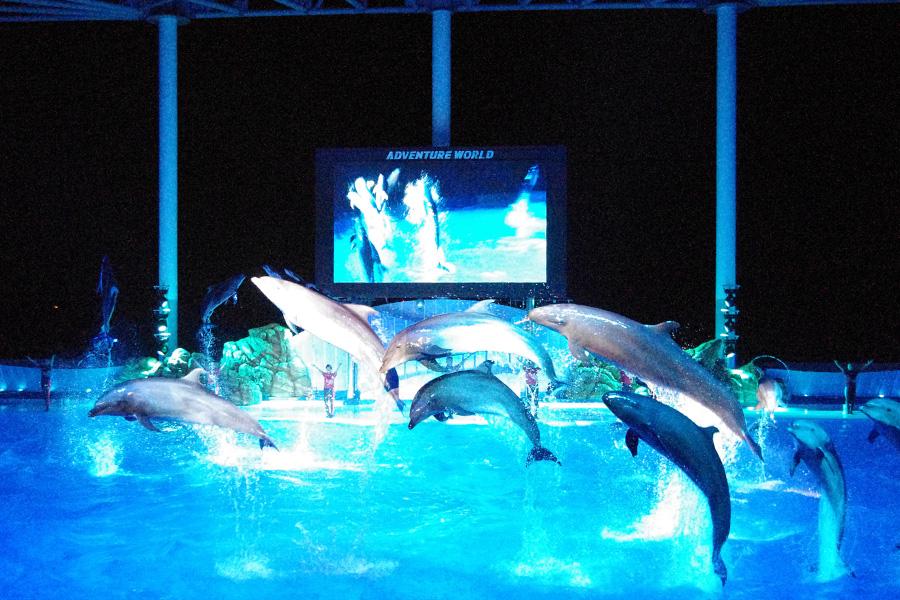 エンディングには、すべてのイルカたちが一斉に飛び出す圧巻のジャンプ
