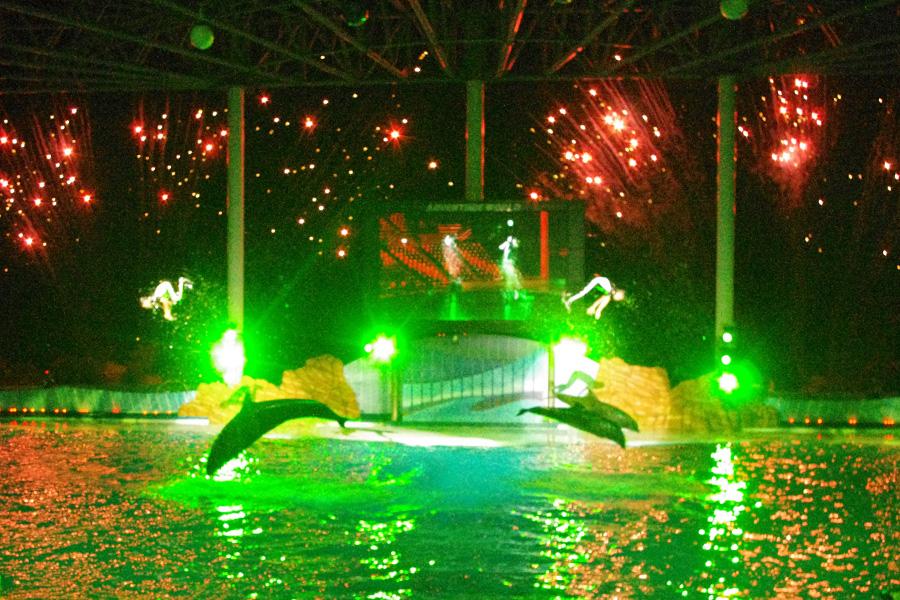 鮮やかなライトや音楽、そして迫力の花火をバックにジャンプしまくるイルカたち