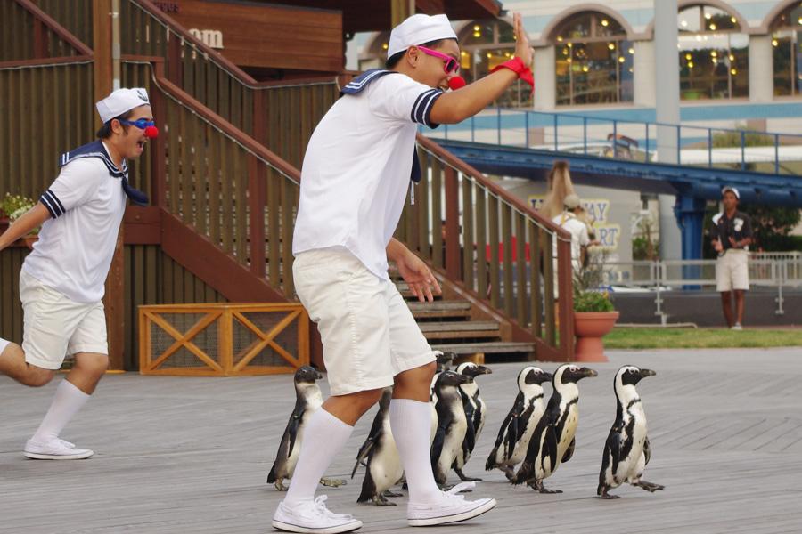 ペンギンたちをはじめ、ペリカンやアシカ、ブタ、ラクダも登場