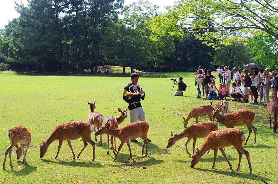 戦後から代々受け継がれてきた特注のホルンで鹿を寄せる、「奈良の鹿愛護会」の藤本康之さん
