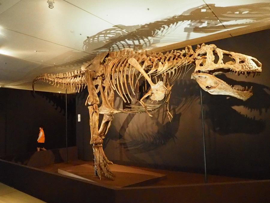 ティラノサウルスのなかでも最大級の標本・スコッティ
