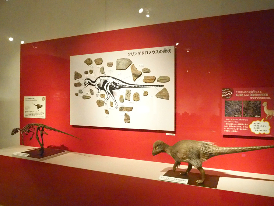 鳥類へと進化した恐竜の一部は羽毛が生えていたというのが今の定説だが、このクリンダドロメウスは鳥類の起源ではない種