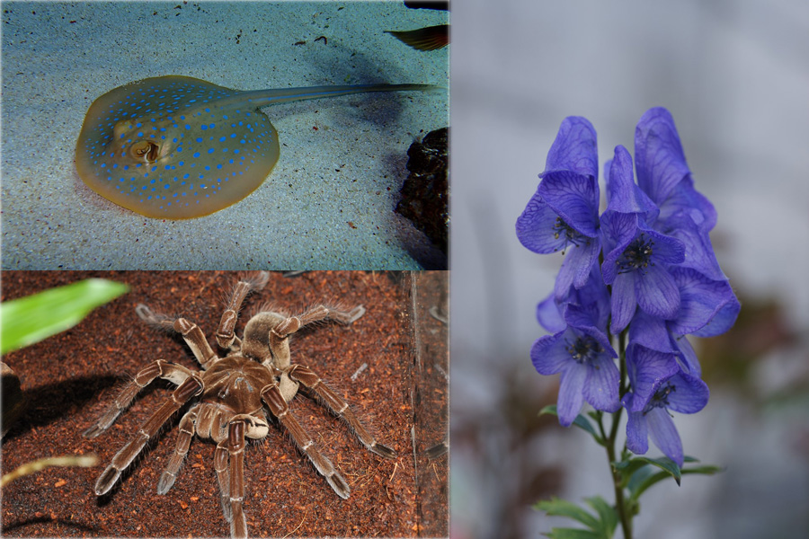 いかにも毒を持っていそうなエイやタランチュラをはじめ、一見安全そうに見える花などにも強い毒素が含まれる