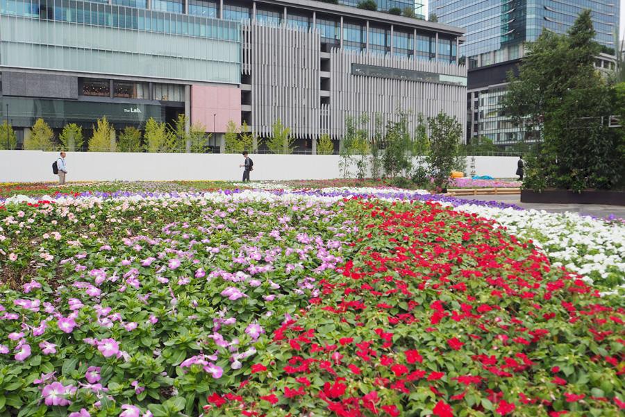 季節に合わせた花々が植えられた「10万株の花畑」。うしろに見えるのは「グランフロント大阪」