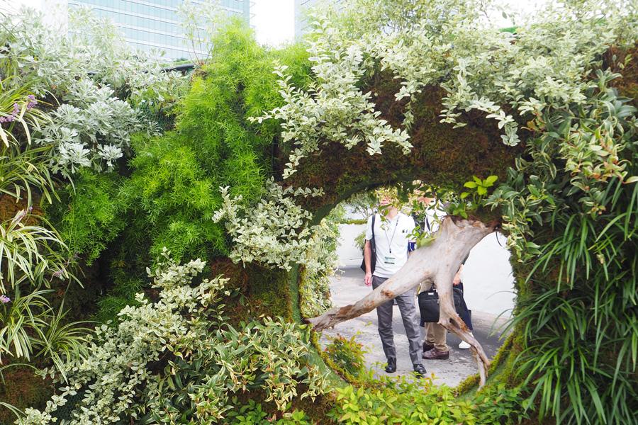 壁面に植物を使った「みどりの小径(こみち)」