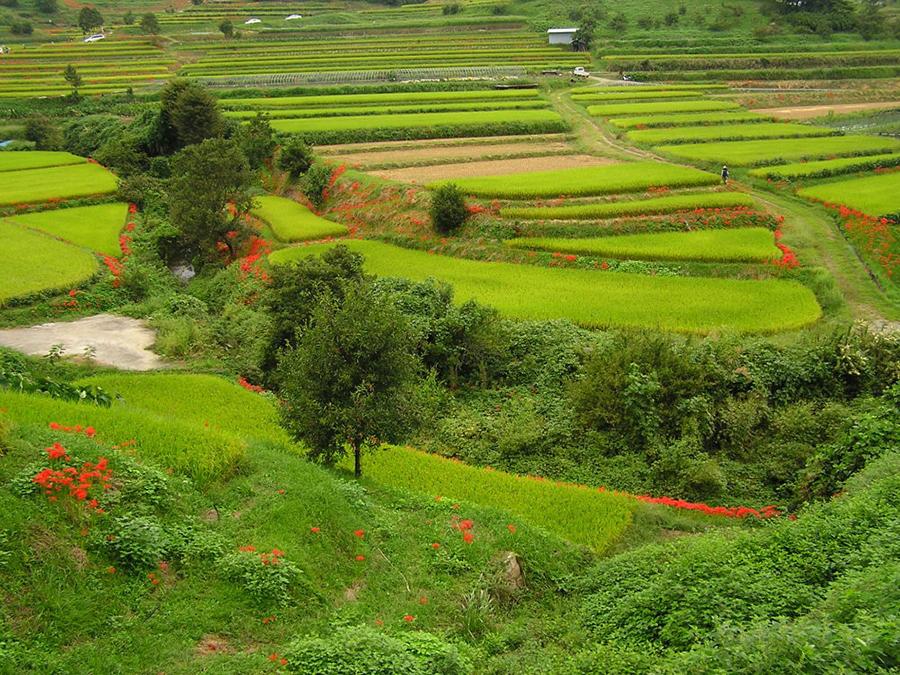 美しい自然が楽しめる明日香村
