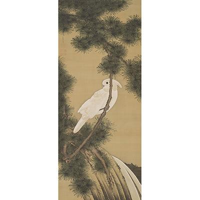伊藤若冲《老松鸚鵡図》 個人蔵