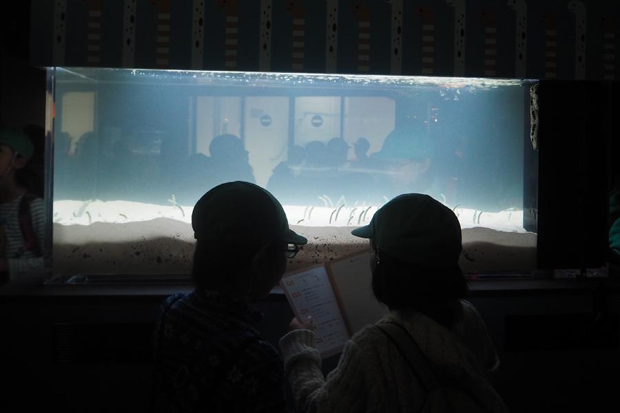 チンアナゴを観察しながらクイズを解く子どもたち