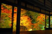 関西で見られる紅葉の名所