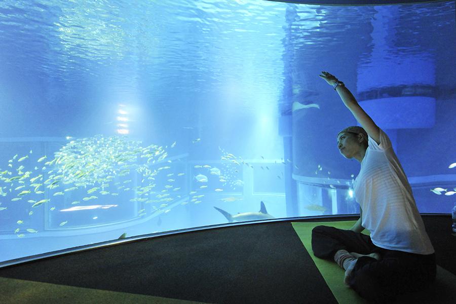 夜の「海遊館」で開催されるヨガ体験(イメージ)
