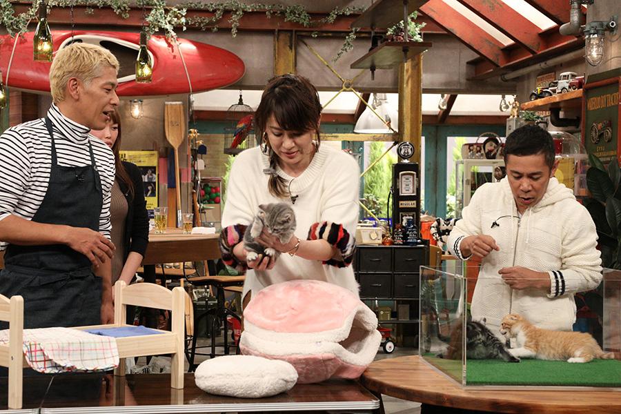 ネコ好きの鈴木砂羽は、ネコ用のベッドをかけて黒ひげ危機一髪勝負に挑む