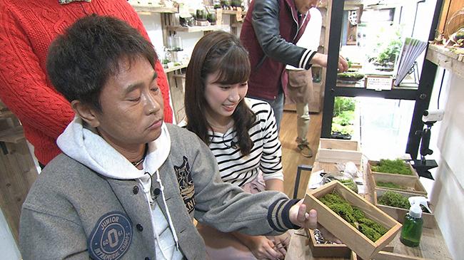 苔テラリウムをつくる浜田と玉巻アナウンサー(毎日放送『ケンゴロー』)