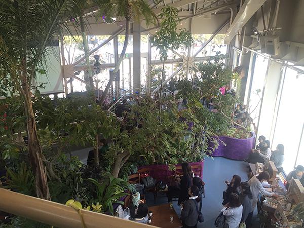 まさにフォレストな店内。めずらしい植物であふれている