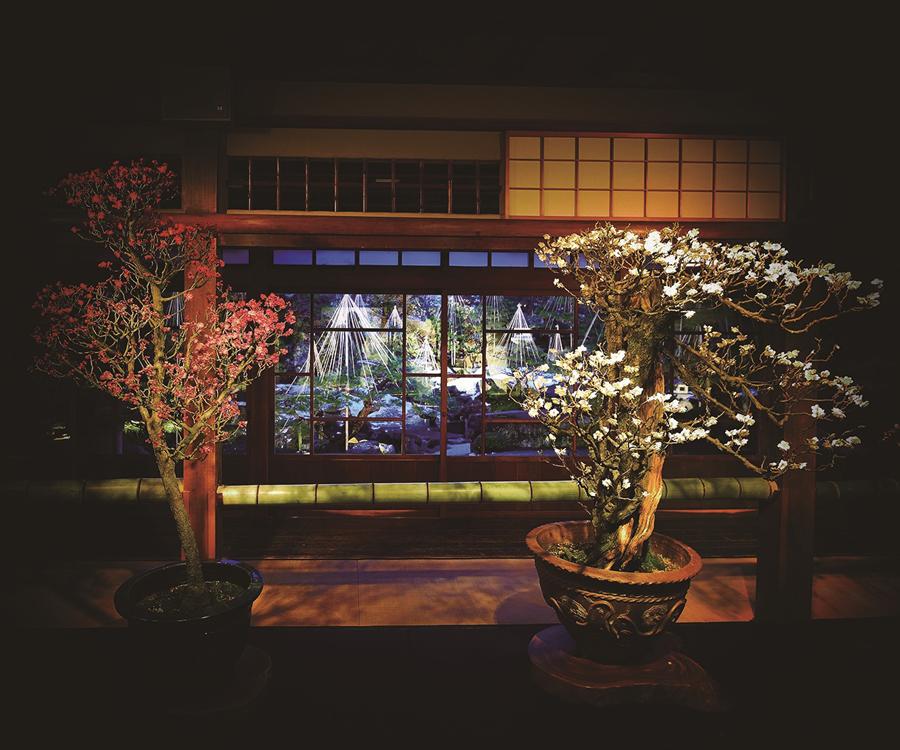 盆梅と名勝庭園を夜間ライトアップする長浜会場