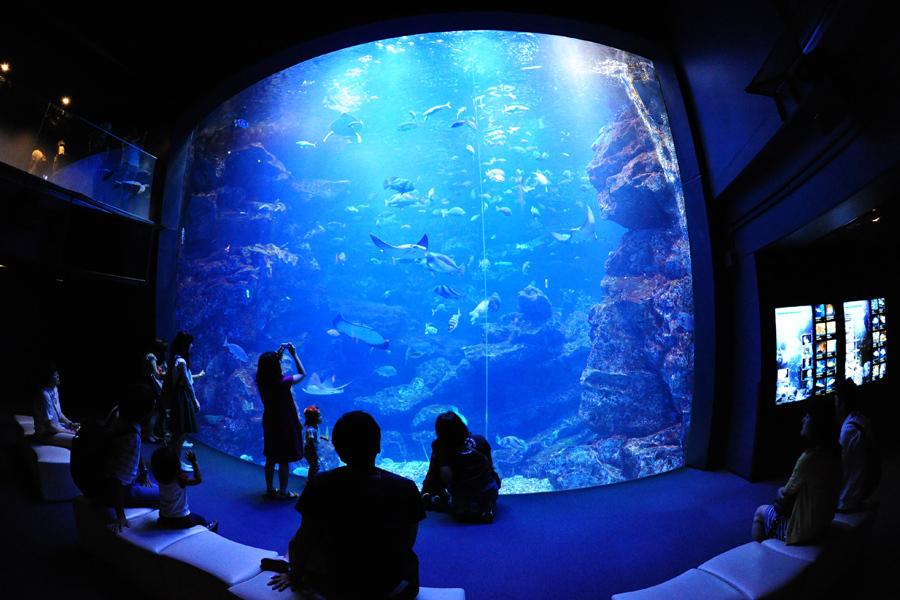 深い青色の照明に包まれる「京の海」大水槽