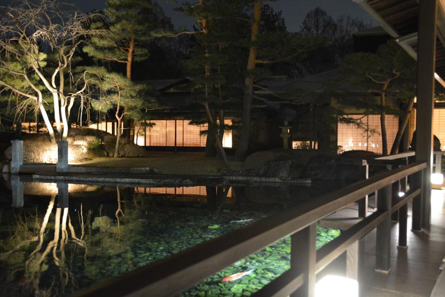 夜間公開の頃には新緑と池を泳ぐ錦鯉のコントラストが楽しめる