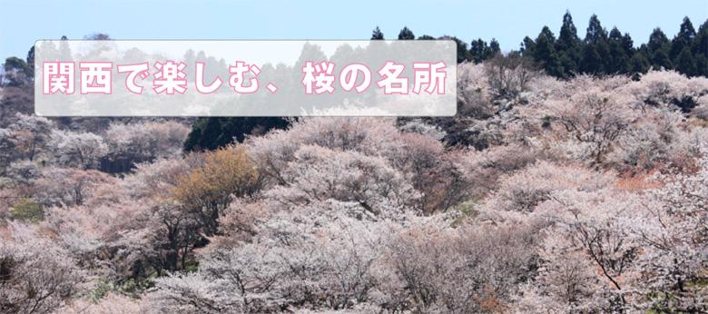 関西で楽しむ、桜の名所(京都編)