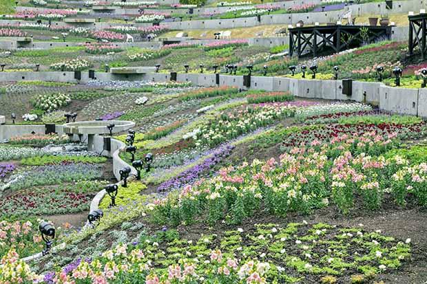 棚田に彩り豊かな花々が広がり、水が流れるせせらぎの音も感じる「ネスタフローラ」