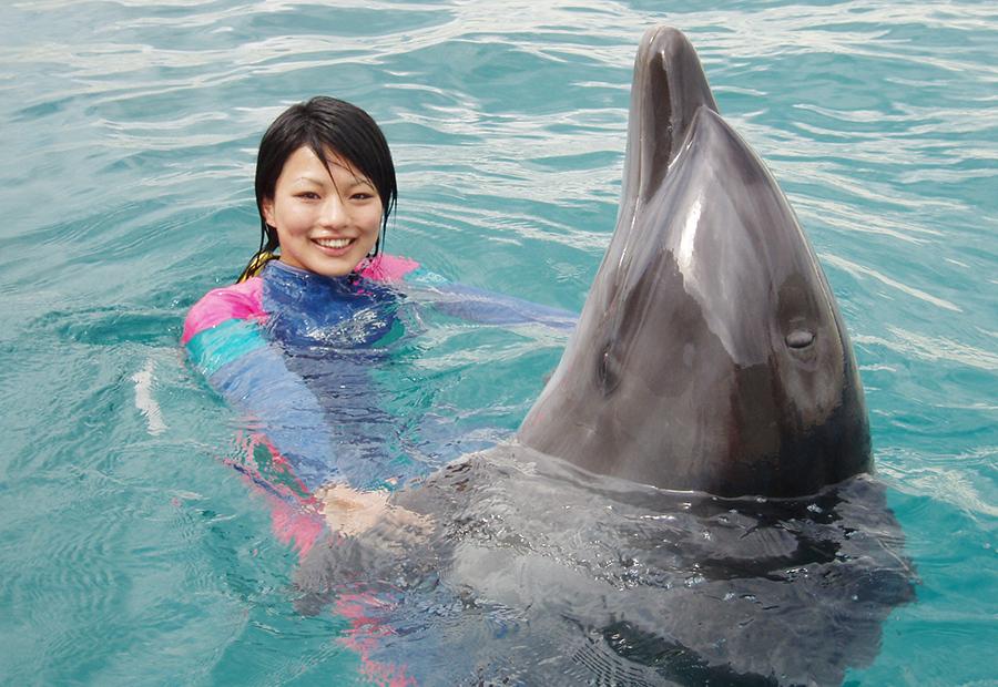 イルカとのふれあい体験(イメージ)