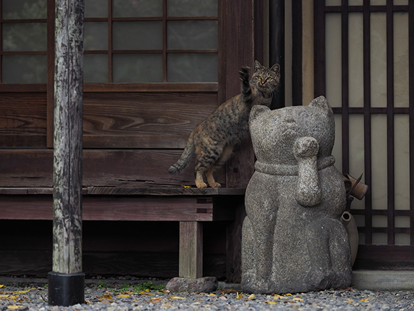 ©Mitsuaki Iwago