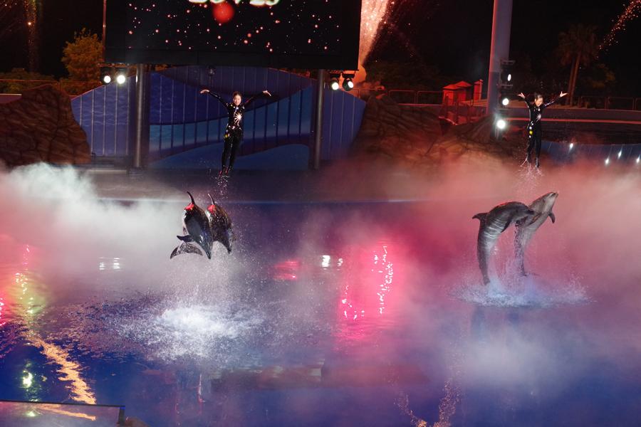 イルカのナイトショーでは、トレーナーたちと見事な演技を披露する(4月30日、アドベンチャーワールド)