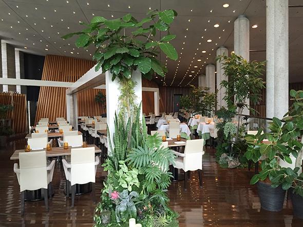 店内もリニューアル。「アーバンフォレスト」をテーマに、高い天井と窓から見える緑を生かし、店内にもグリーンを多く配置。リラックスできるナチュラルな空間に